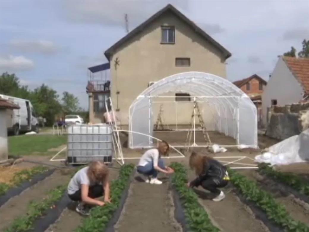 četiri žene obrađuju zemlju  (2)