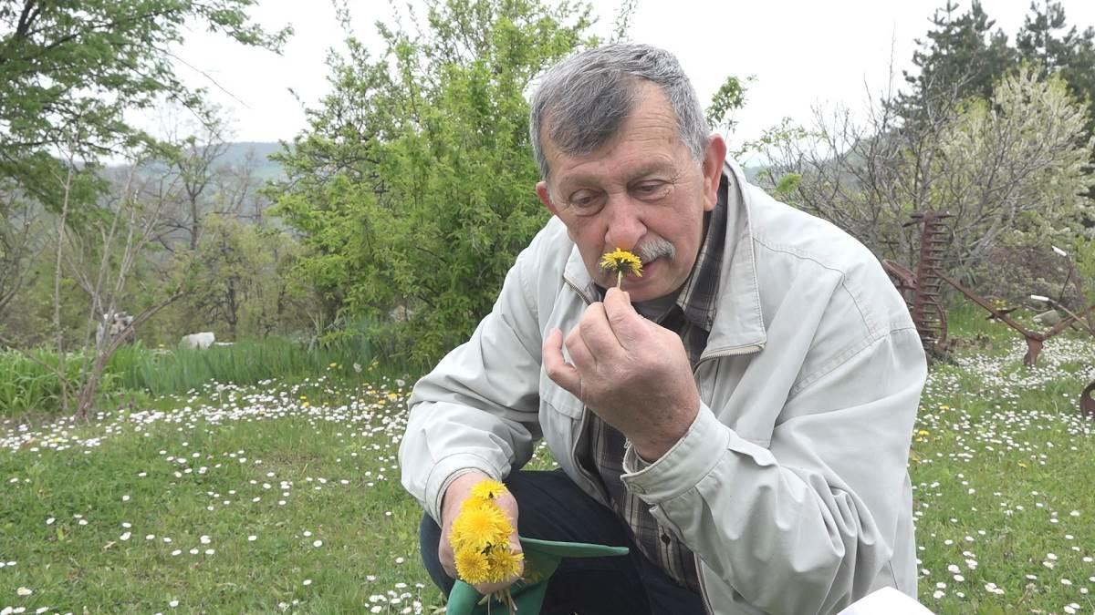 Maslačak može da se jede od korena do cveta