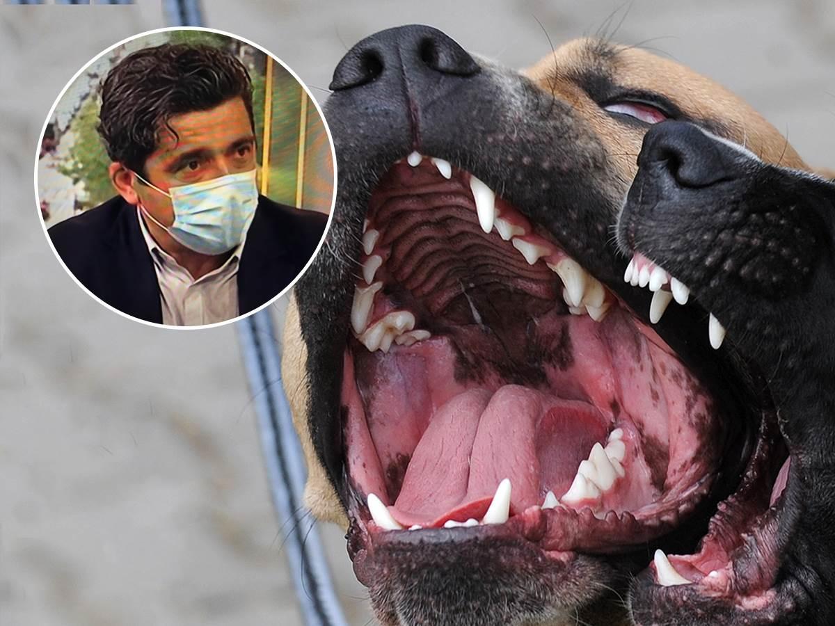 napad-psa,-kako-se-odbraniti-od-besnog-psa