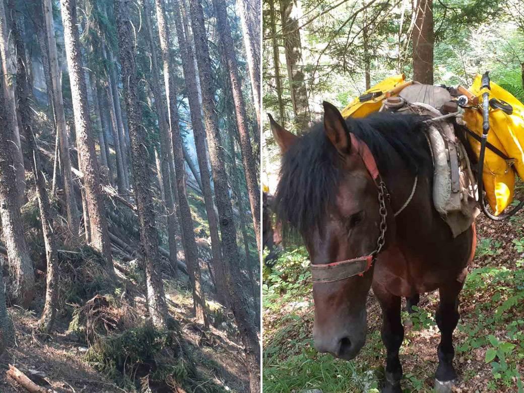tara šuma konji gase požar