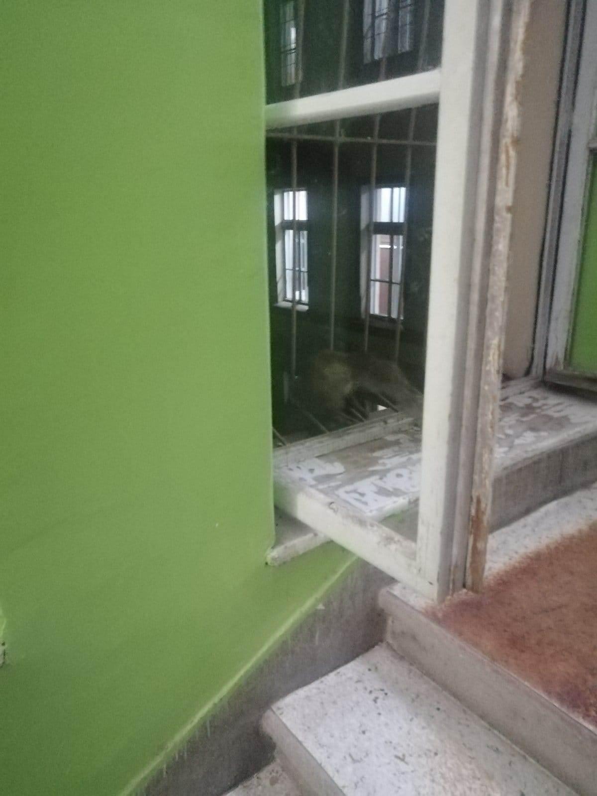 Lisica na hodniku internog odeljenja čačanske bolnice