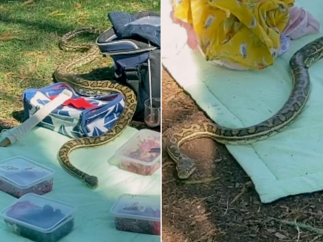zmija,-piknik