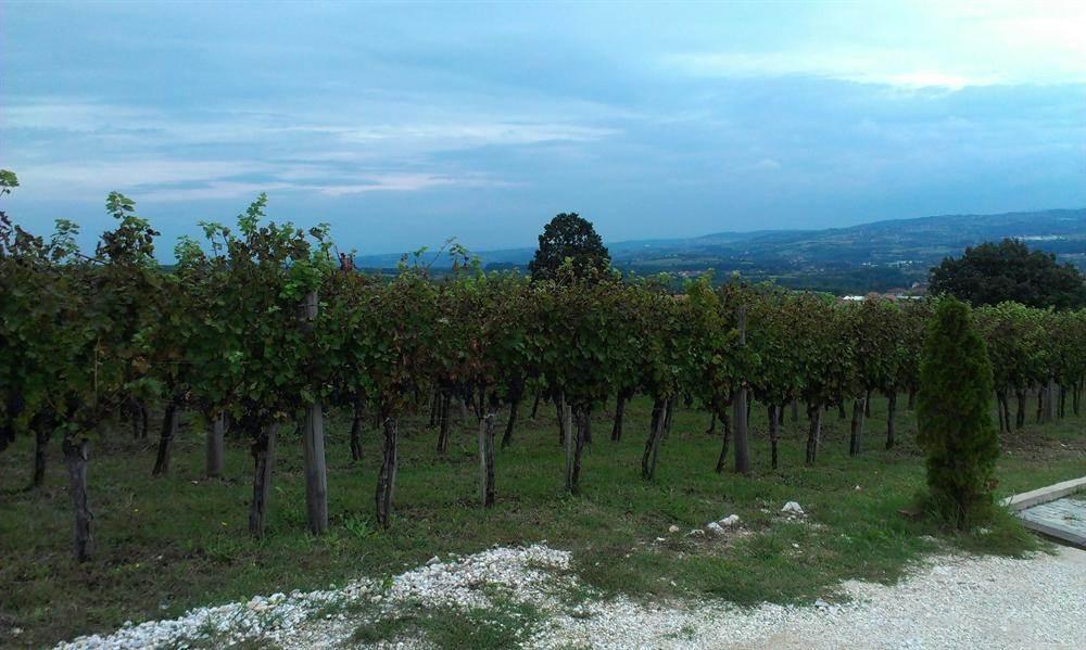 vinograd, vino, Šumadija, Orašac