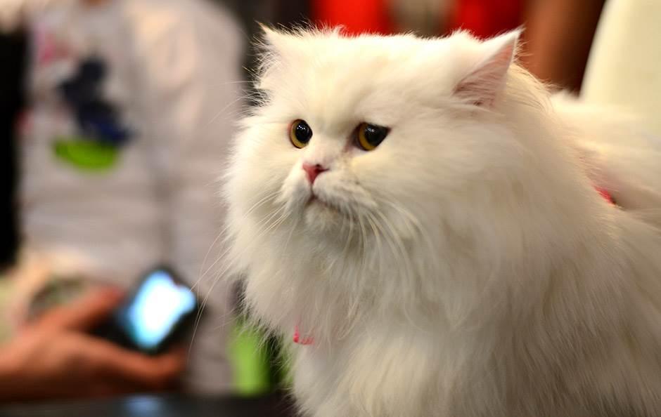 Ovo možda niste znali o mačkama (VIDEO)