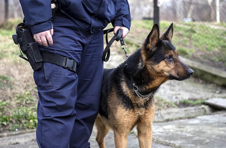 psi, policija, beograd, vučjak