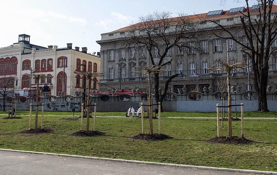 drveće, studentski park,