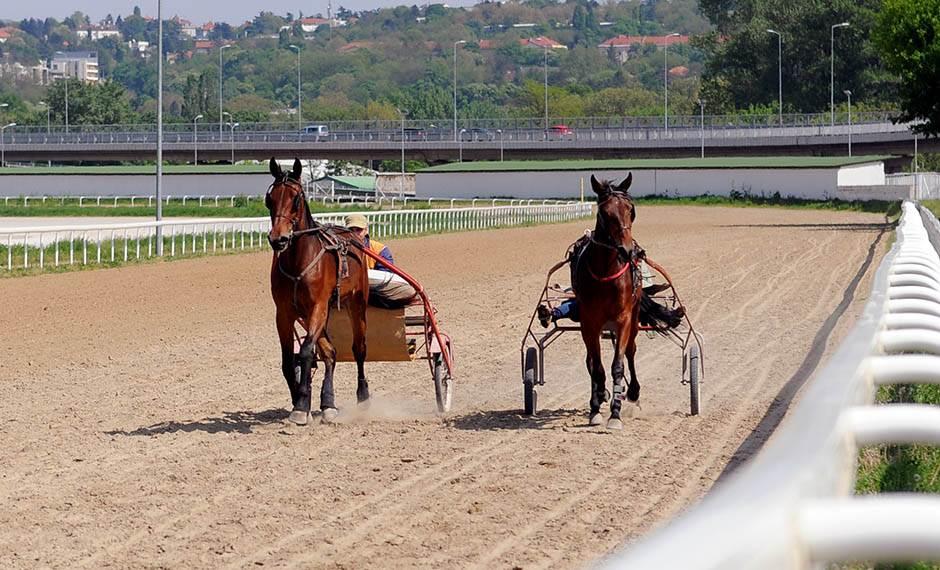 hipodrom, trke konja, konjičke trke, konji,