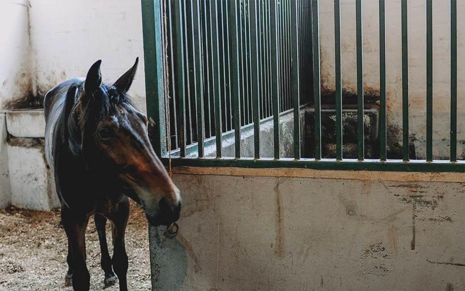 konj, štala,