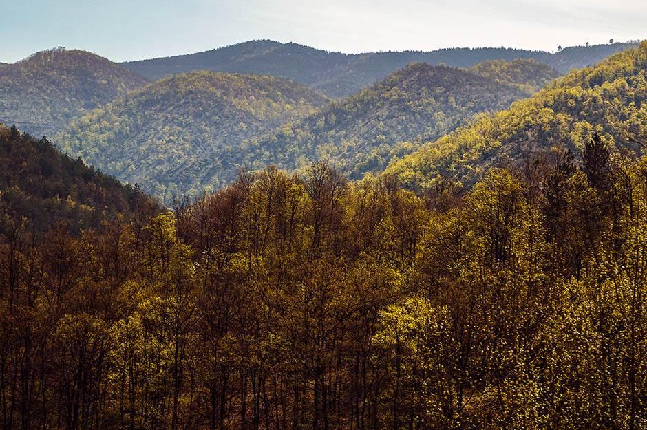 priroda, drveće, brdo, planina, šumadija, srbija, brda, planine, zelenilo, drveće, šuma, pejzaž