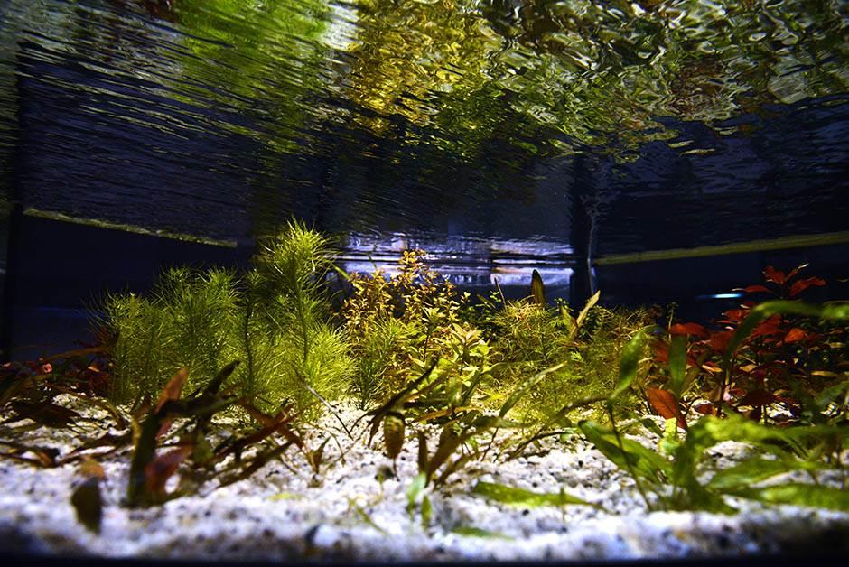 akvarijum, javni akvarijum, ribice, ribe, vodeni svet,