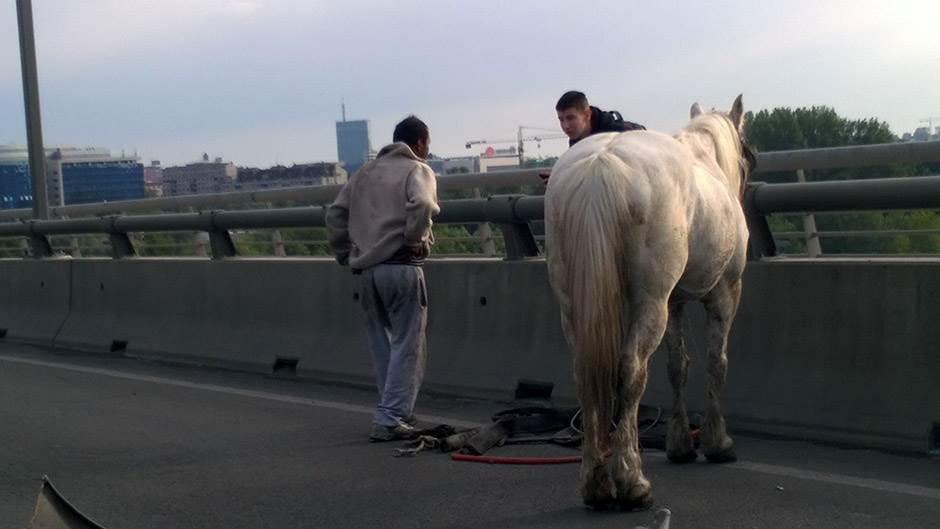 sudar, most na adi, konj