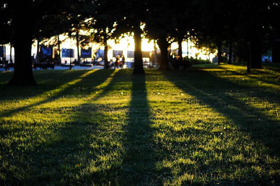 priroda, trava, drvo, drveće, sunce, zalazak sunca, kalemegdan, zelenilo, lepo vreme, leto, sunčano, livada, park,
