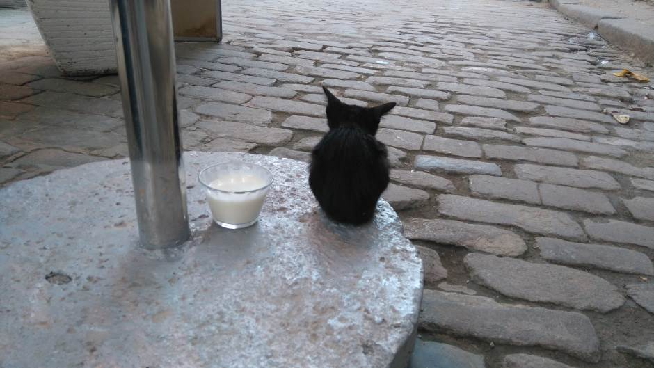 Havana, Kuba, mačka, mačke, maca, mace
