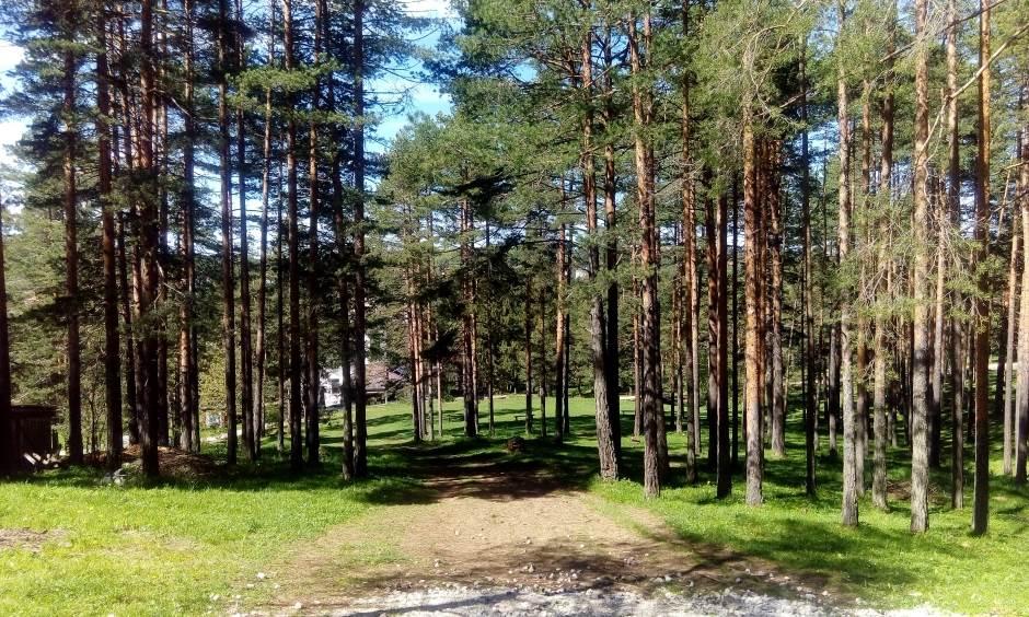 zlatibor, šuma, priroda