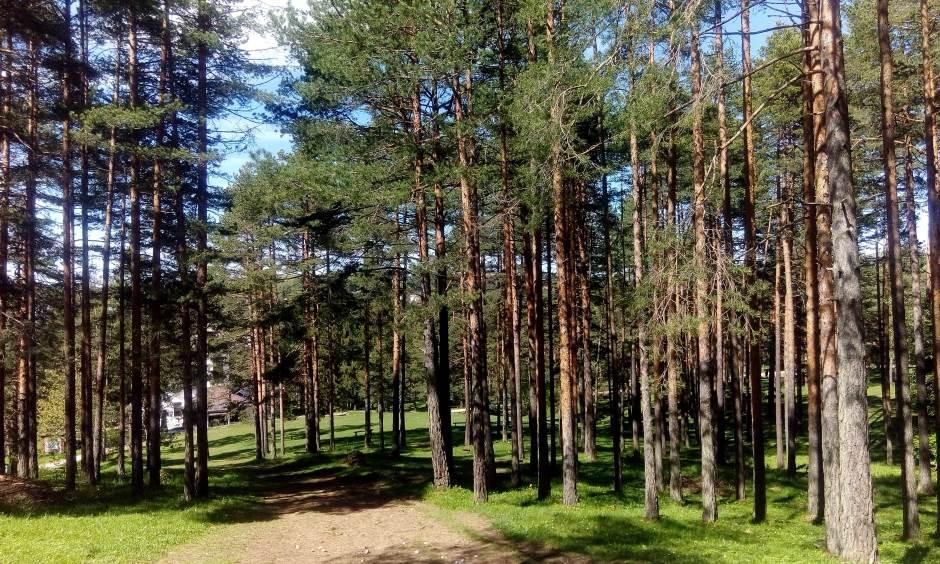 zlatibor, šuma priroda