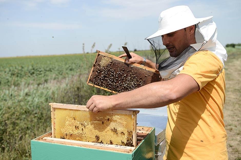 Ko je pobio pčele i ribu u Kikindi? Hoćemo odgovore