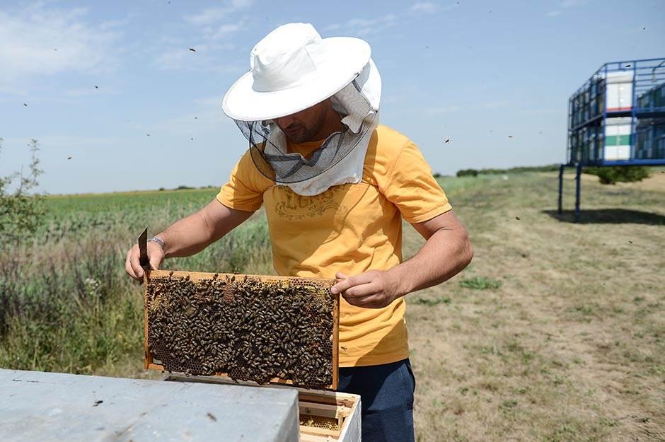 Ove godine u Srbiji rekordnih 9.000 tona meda