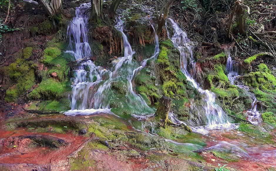 šuma, divljina, potok, rečica, priroda, prirodne lepote, srbija