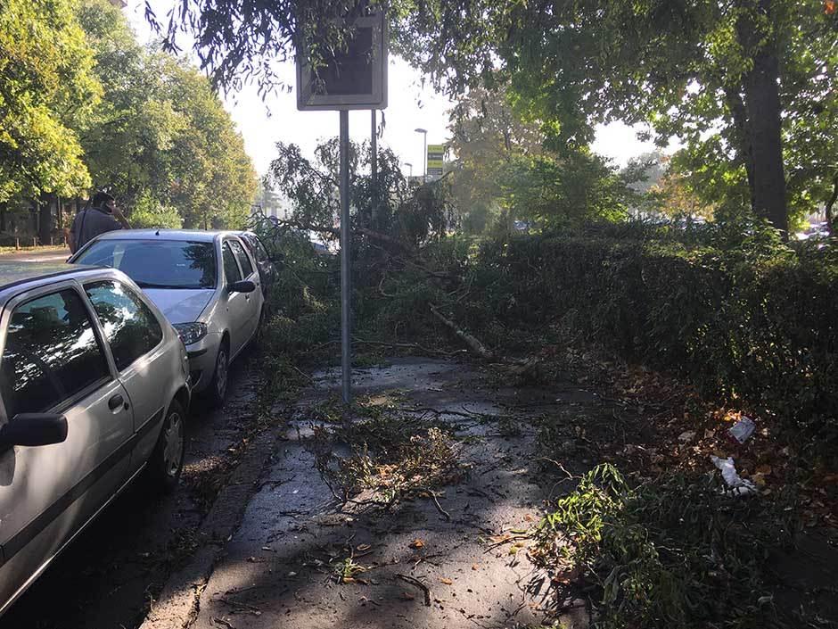 Oluja iščupala iz korena drvo u Zemunu!