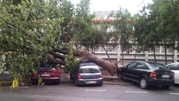 automobil, drvo, nevreme