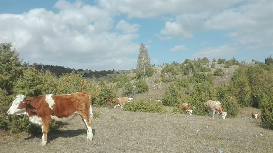 Kustine krave slušaju samo Mocarta!