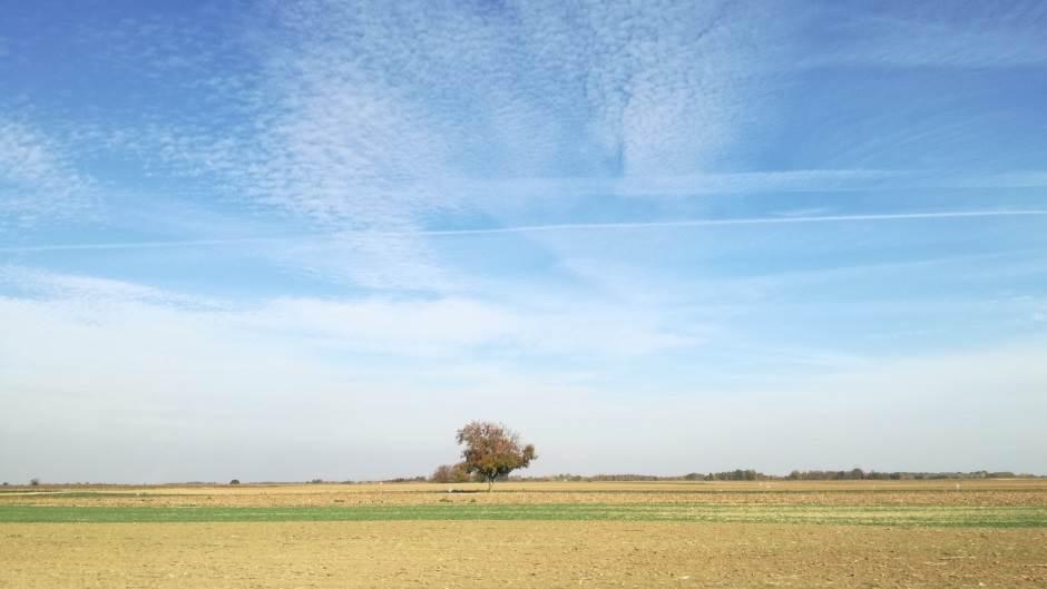 ravnica, Vojvodina, poljoprovreda, njiva, panonija
