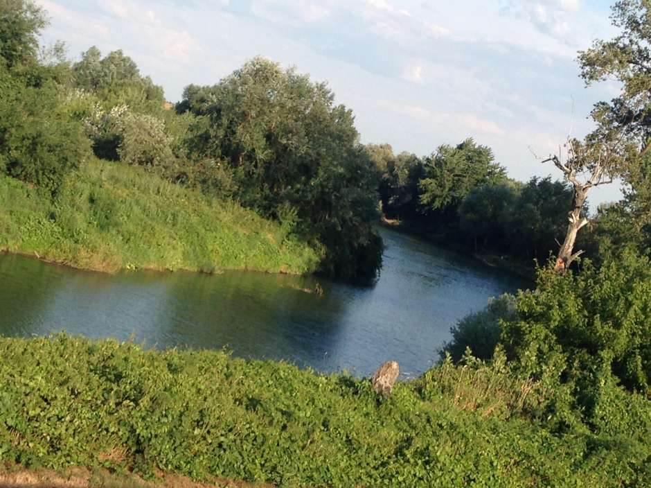 tamiš, voda, priroda, reka