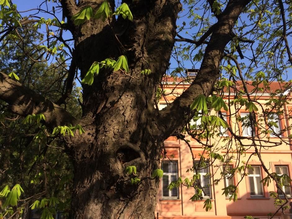 drvo, proleće, sunce