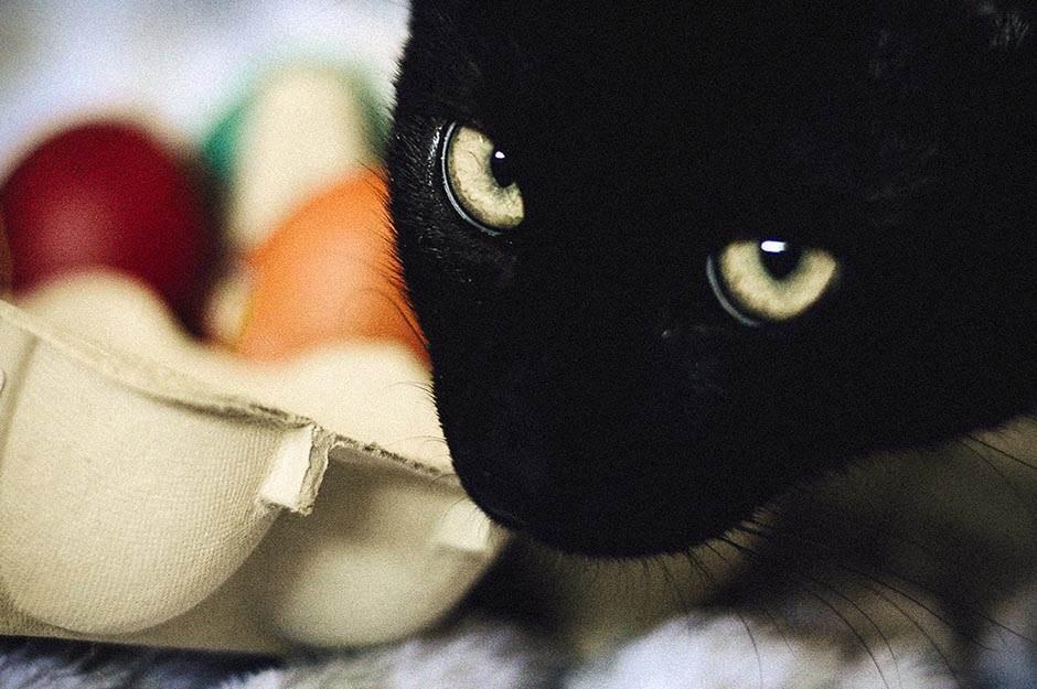 crna mačka, mačka, maca, petak 13.