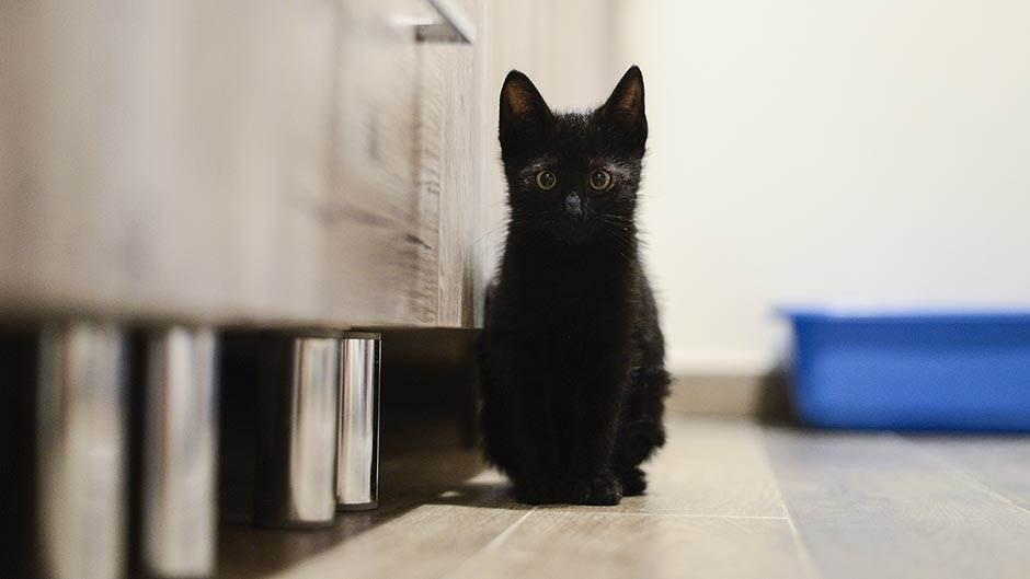 crna-mačka-stefan-stojanović-2.jpg