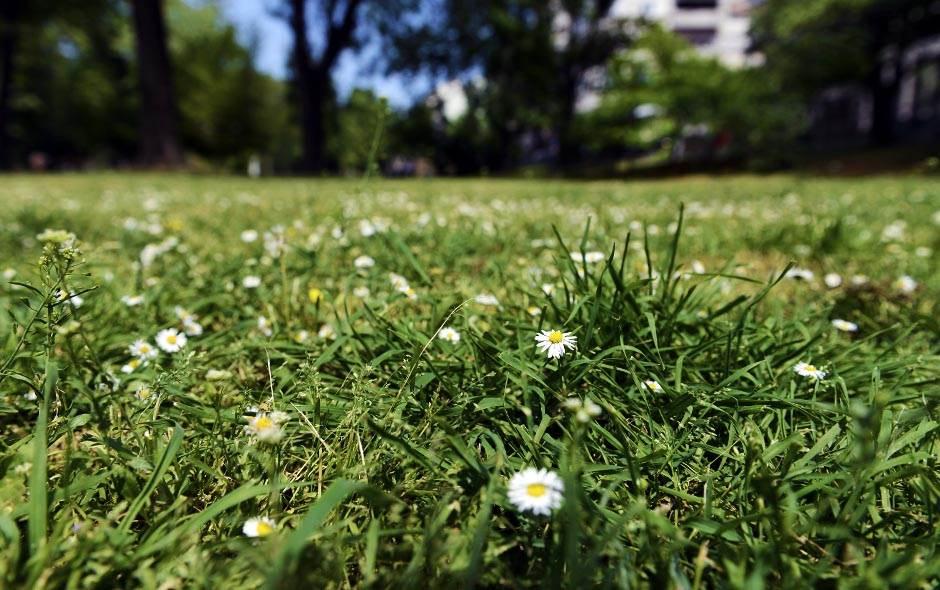 karađorđev park, proleće, priroda