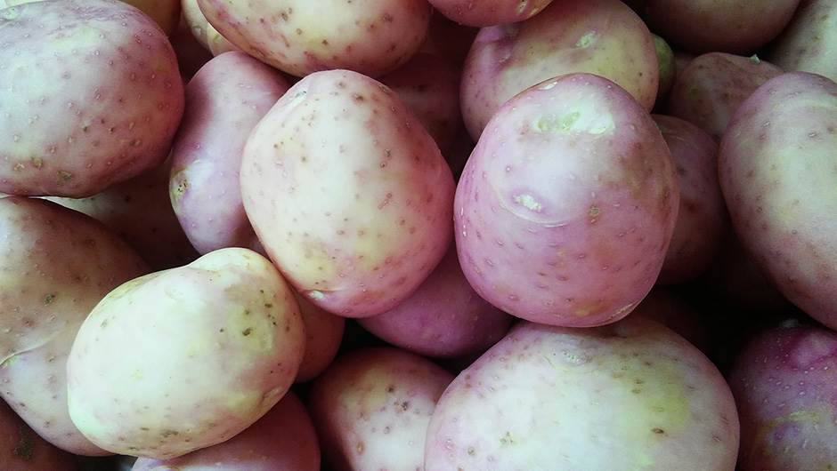 krompir, povrće