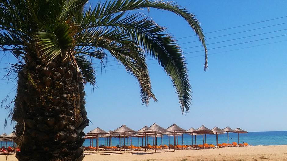 more, talasi, plaža, suncobran, palma
