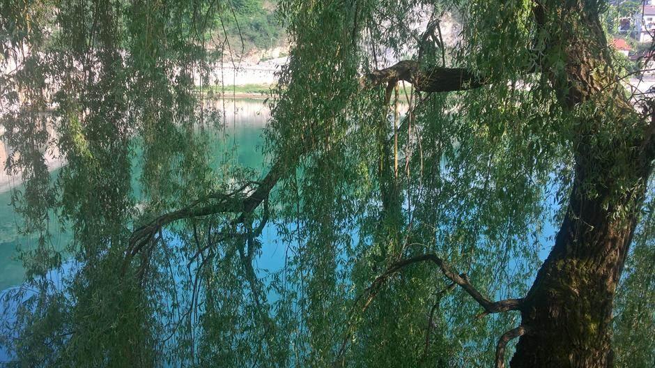 drvo, reka, vrba, vreme