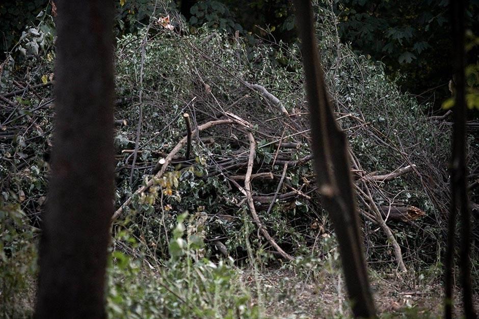 Ko seče šumu na Miljakovcu?