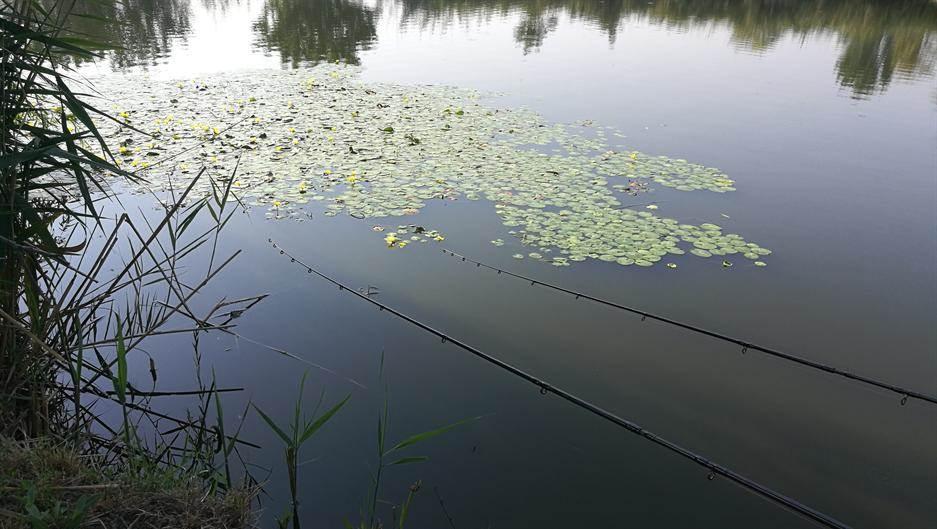 Pecanje, Ribolov, bara, vode Srbije
