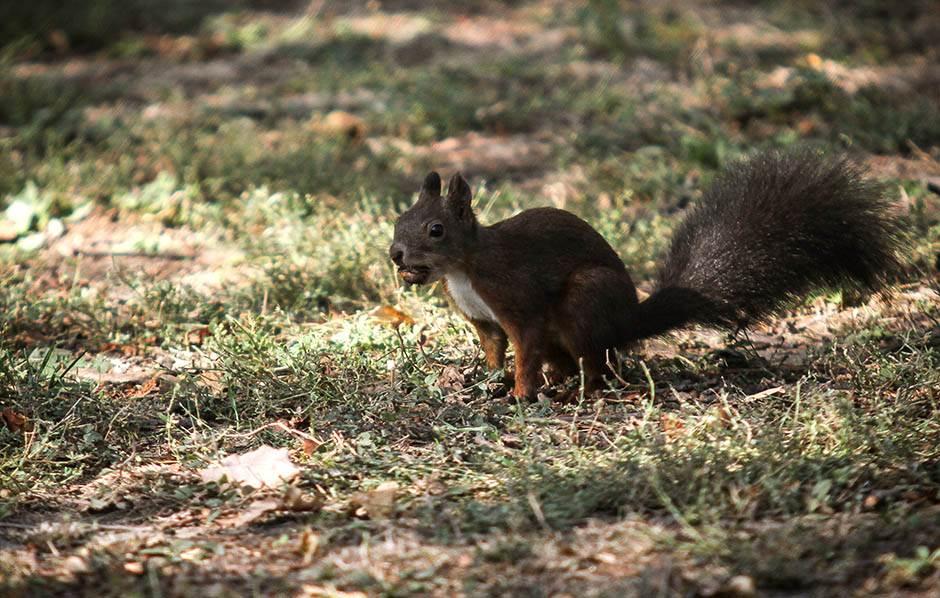veverica-jesen-beograd-stefan-stojanović-14.jpg