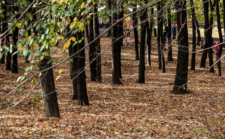 jesen, lišće, drveće, park, šuma