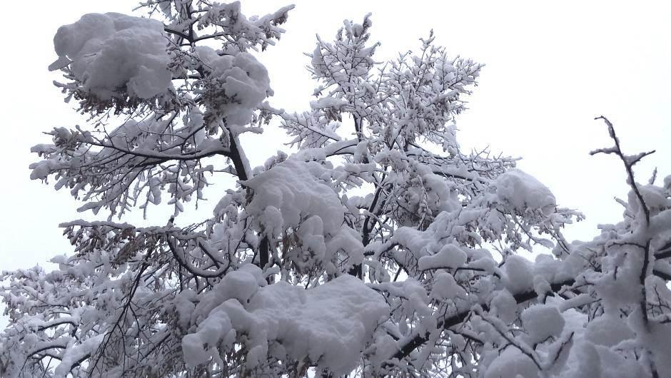 sneg, drvo, zima, drveće, grane