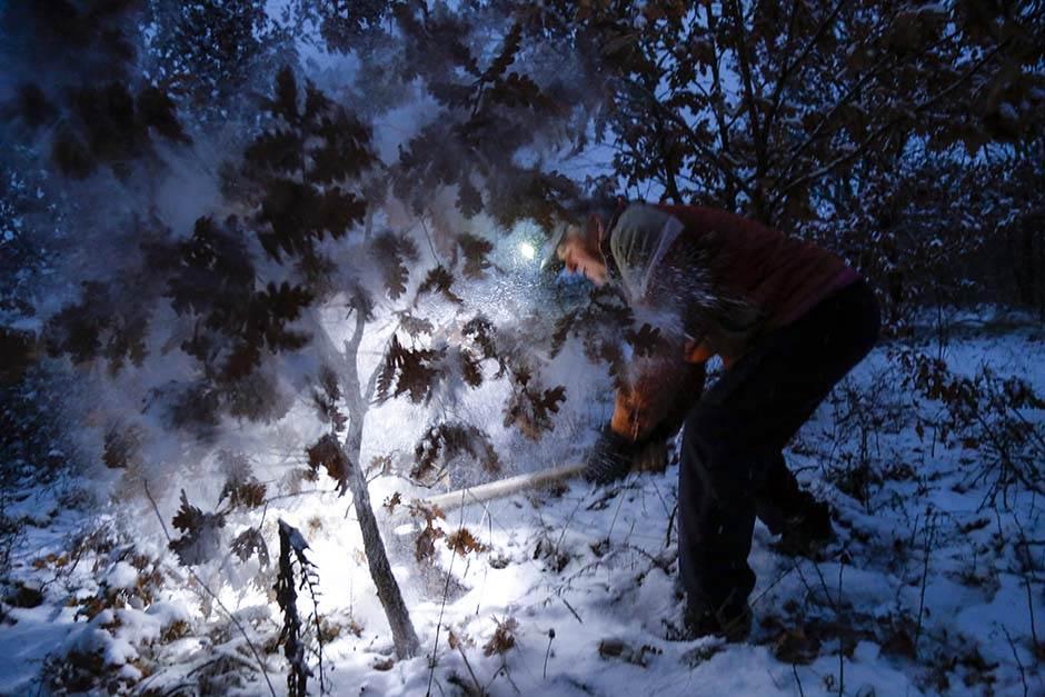 badnjak, božić, šuma, sekira, seča