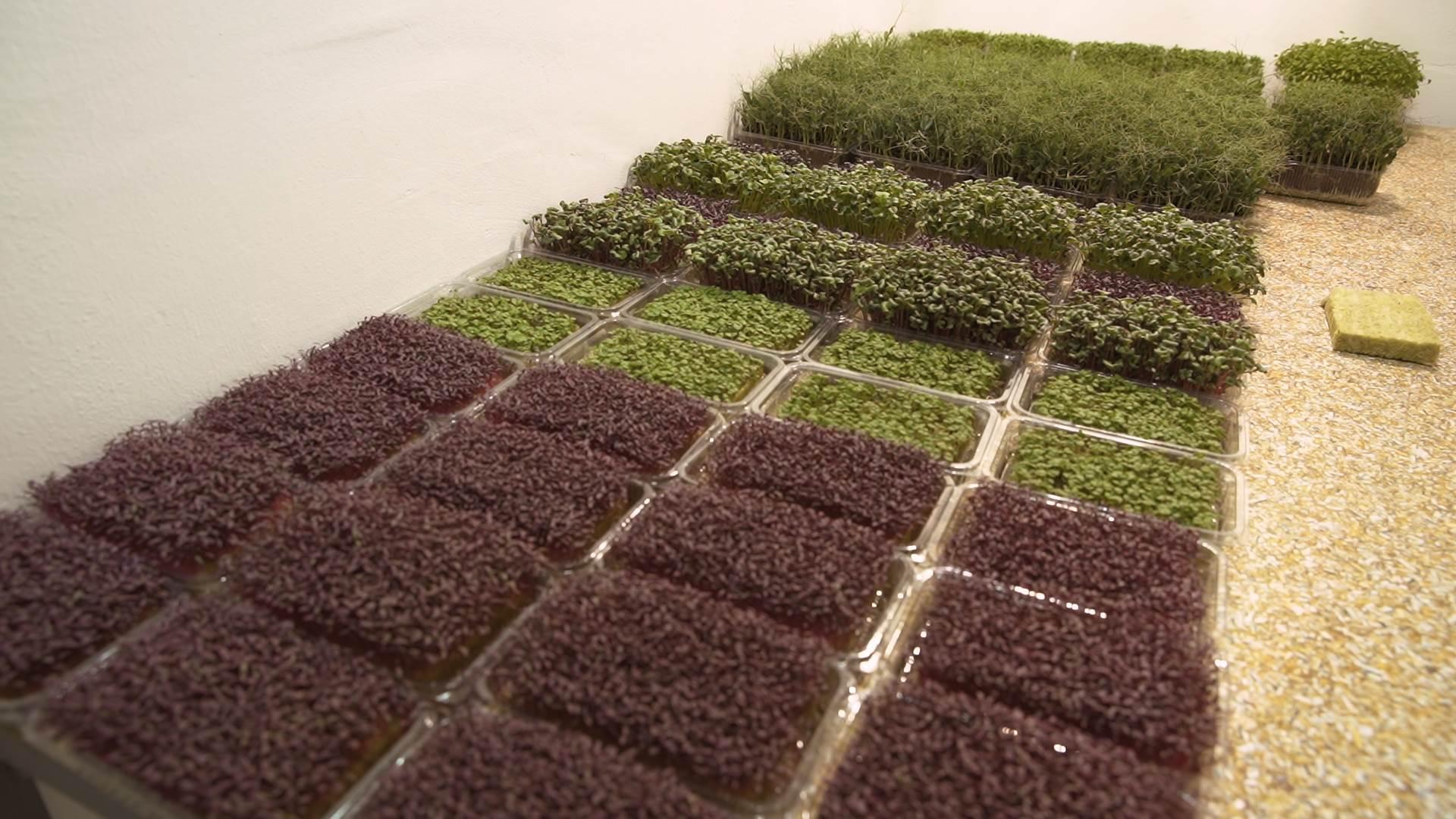 mikro bilje, biljke, bilje, začini