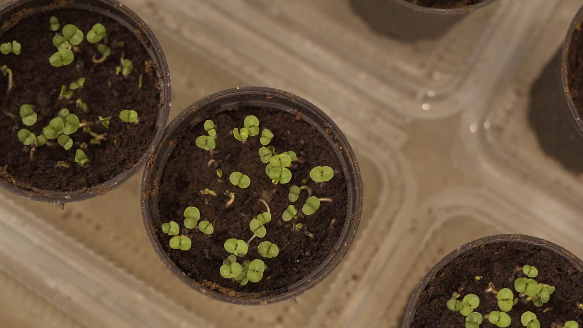 mikrobilje, bilje, biljke