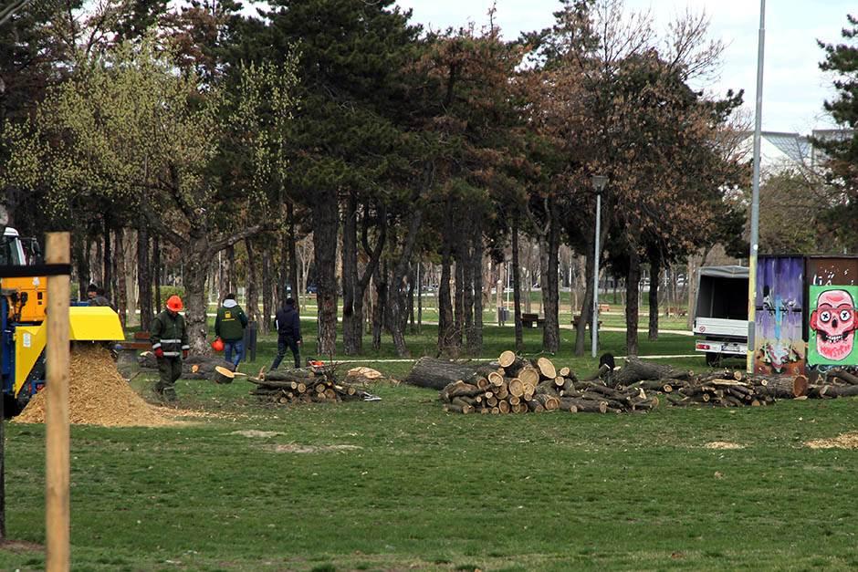 Seča drveća na Ušću