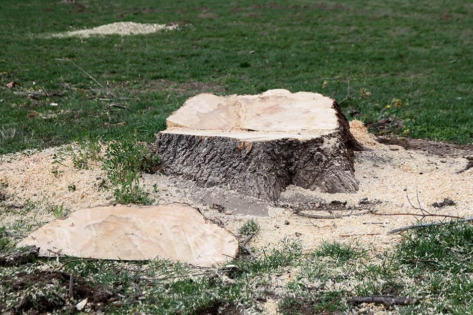 ušće, seča drva, šuma, seku drva, seku šumu, drvoseča,