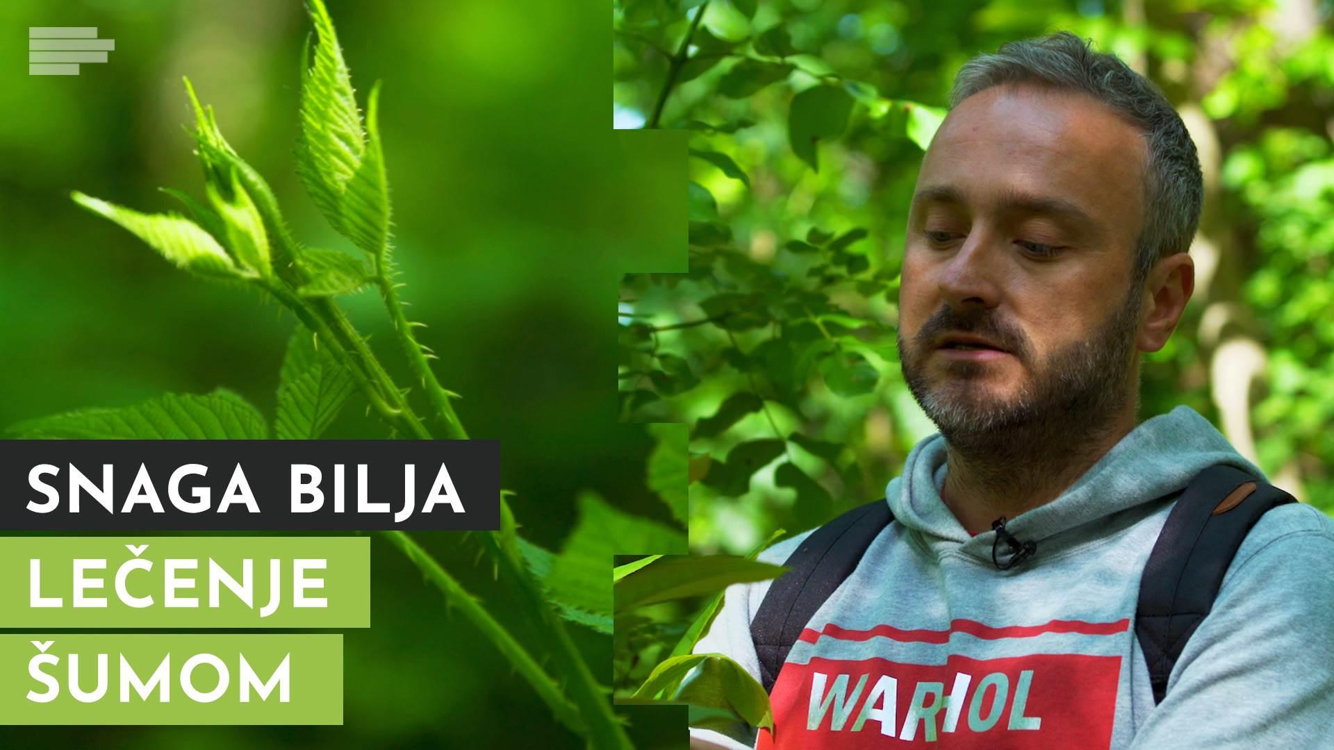 Snaga bilja: Lečenje šumom