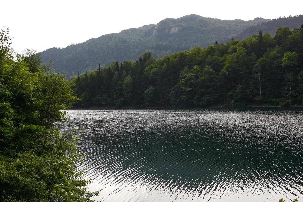 biogradsko jezero šuma mondo goran sivački (11).jpg
