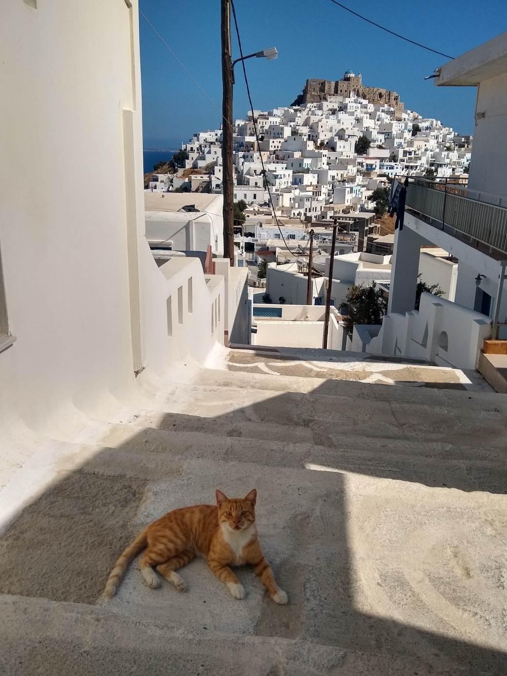 astipalea astipalaja ostrvo grčka mačka