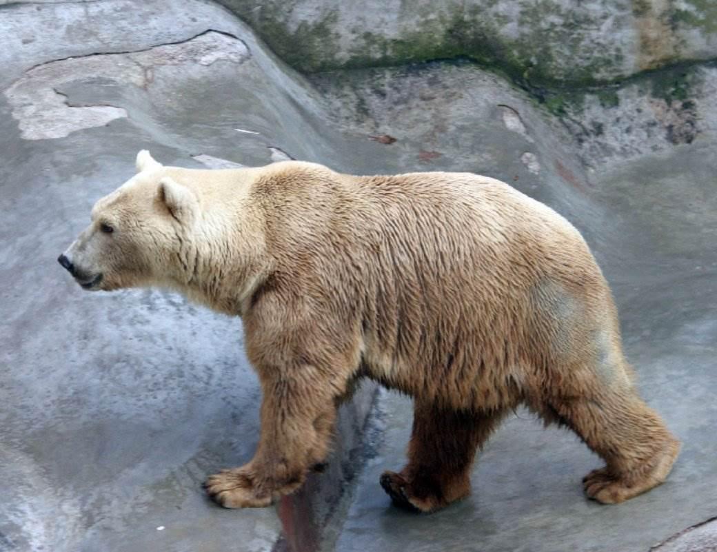Medved.jpeg