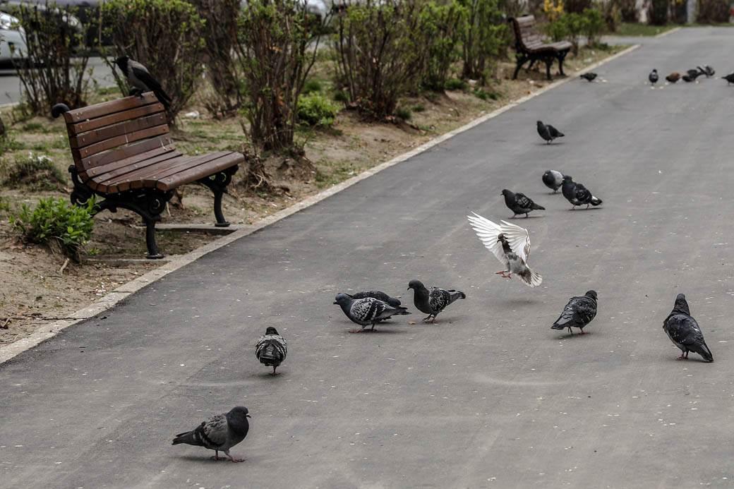 zatvoreni parkovi vanredno stanje puste ulice