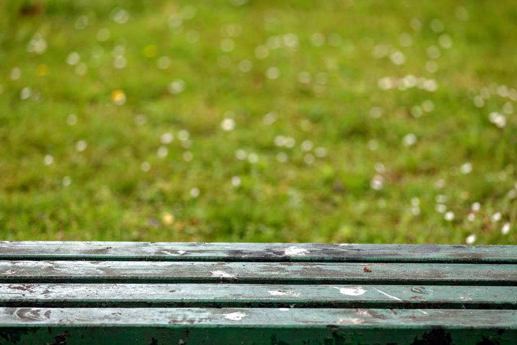 proleće park parkovi topčider priroda drveće zelenilo vegetacija
